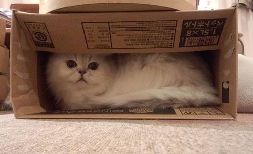 猫カフェ1.jpg