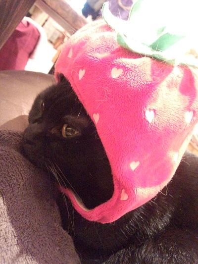 猫カフェ5.jpg